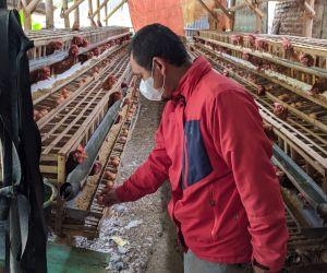 Harga Telur Kian Anjlok, Peternak di Ponorogo Ini Pilih Gadaikan BPKB