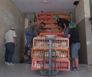 Mengupas Bisnis Ayam yang Tetap Berkembang di Masa Pandemi